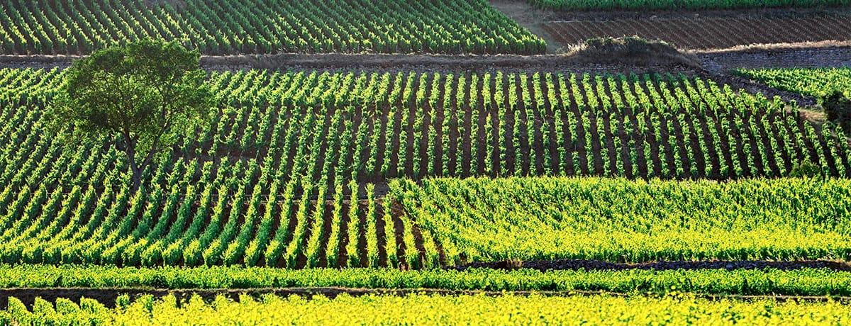 Nos hôtels sur la route des vins en Bourgogne