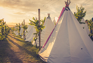 Glamping at Rhythm & Vines