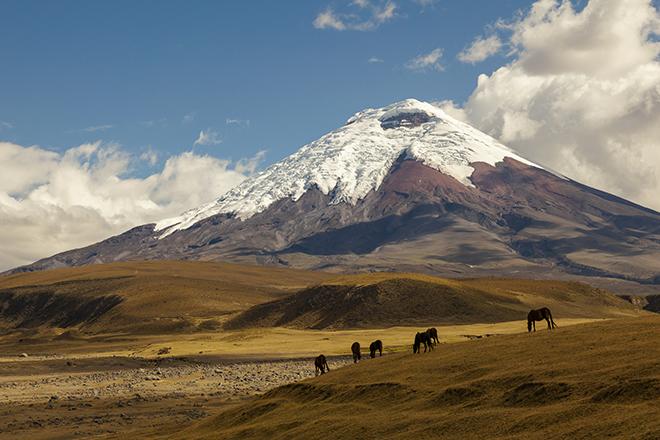 Kaffees Quito Äquator