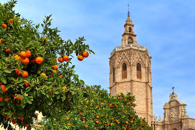 Zitrusnoten auf den Straßen Spaniens