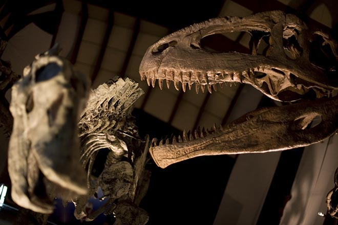 australischen Museum
