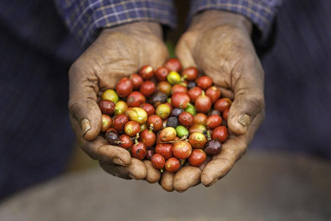 Kaffees Kenia
