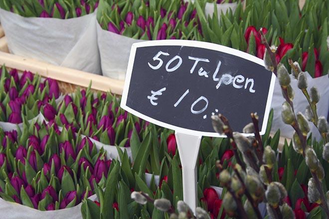 tulip amsterdam flower market bloemenmarkt