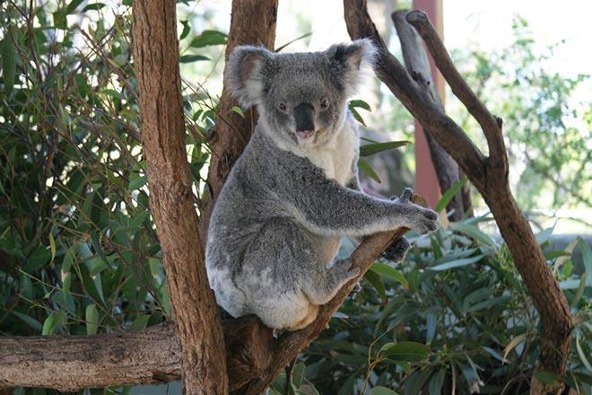 zoo de Taronga