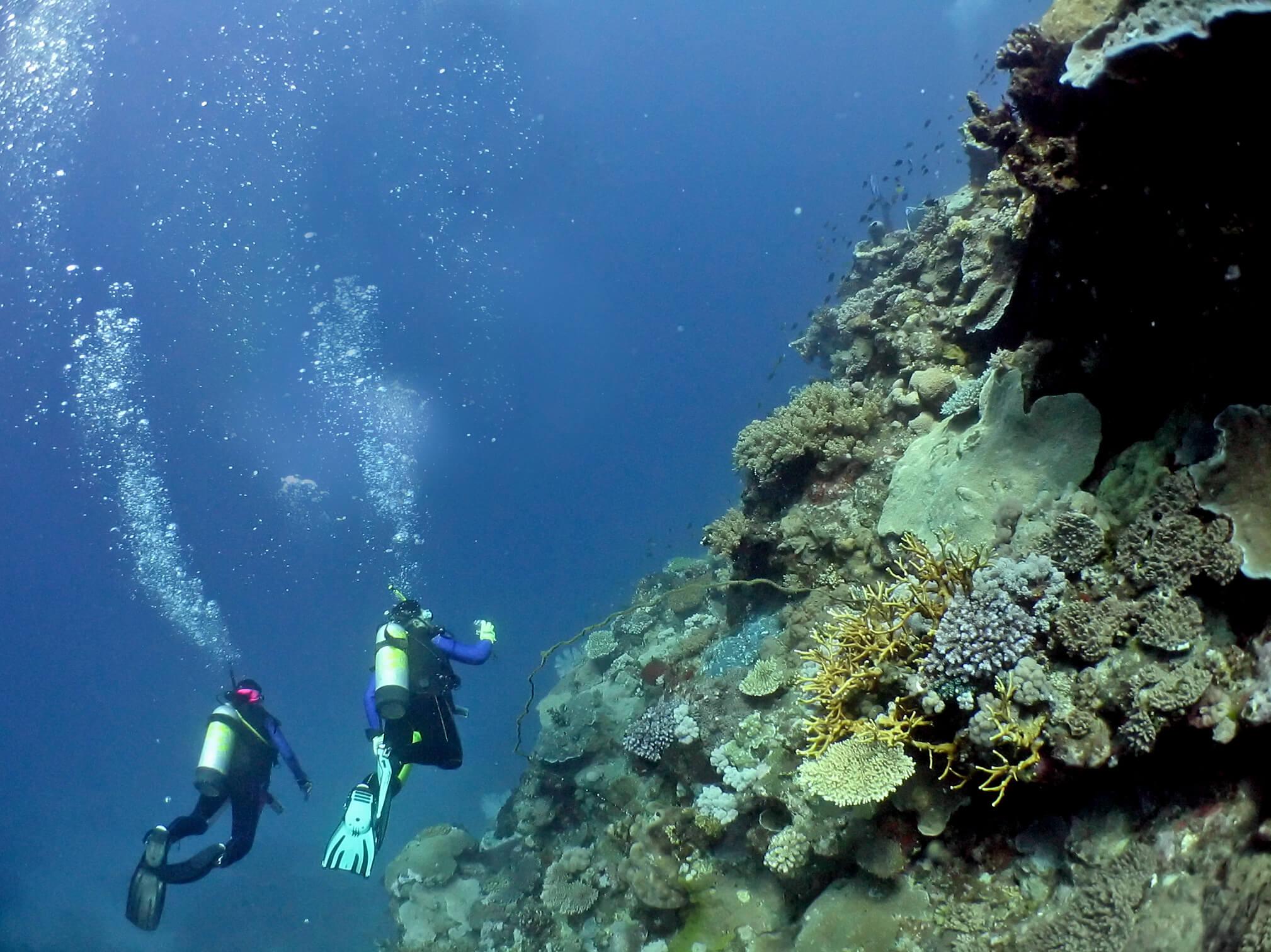 scuba drivers underwater