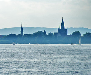 Daphnien in Konstanz