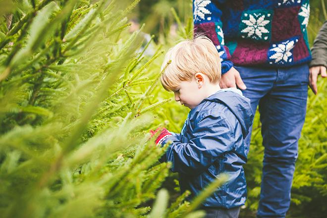 Weihnachtsbaum Weihnachtsmarkt