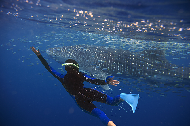 Swim with Whale Sharks - Tourism Australia