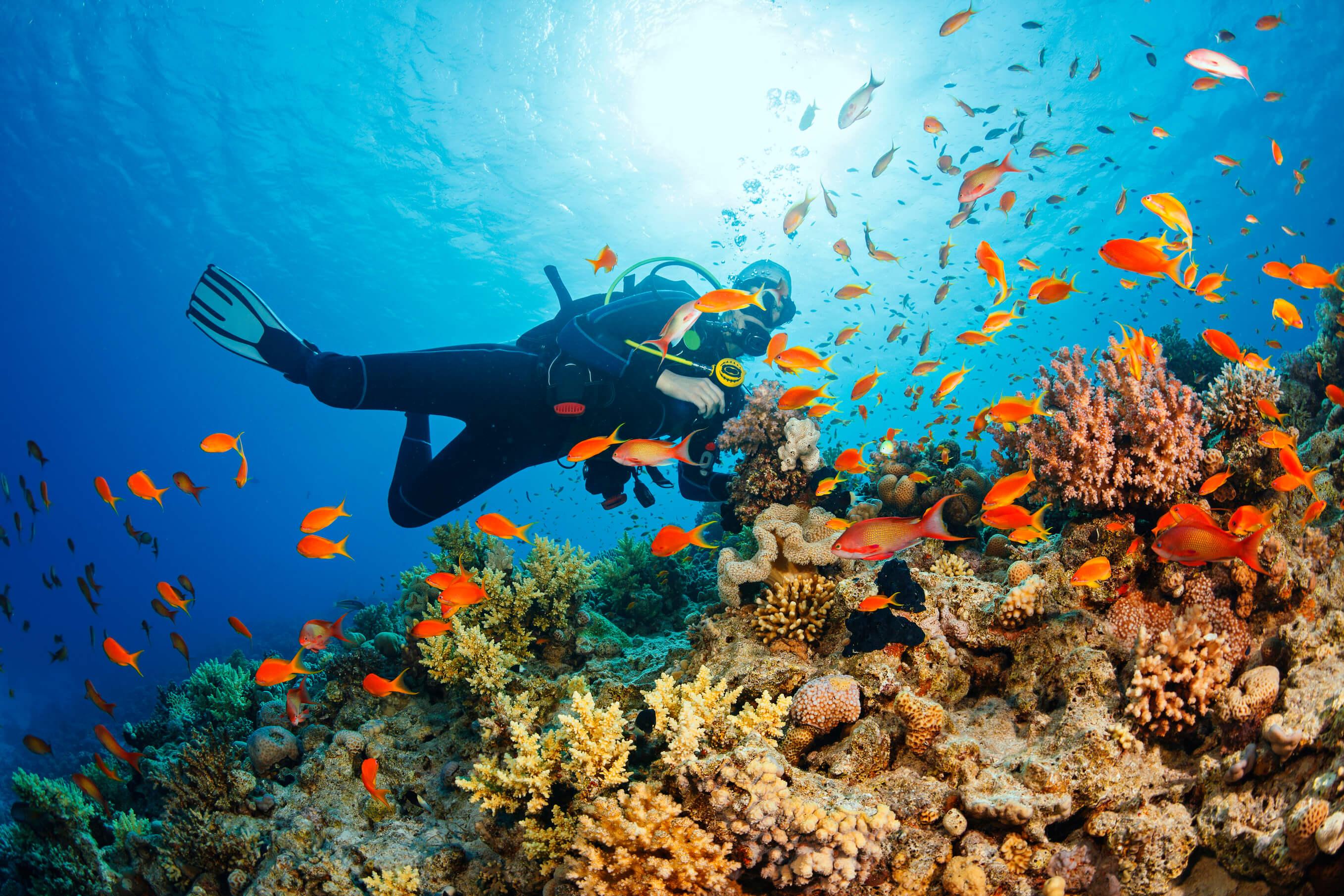 korallenriffs auf bali