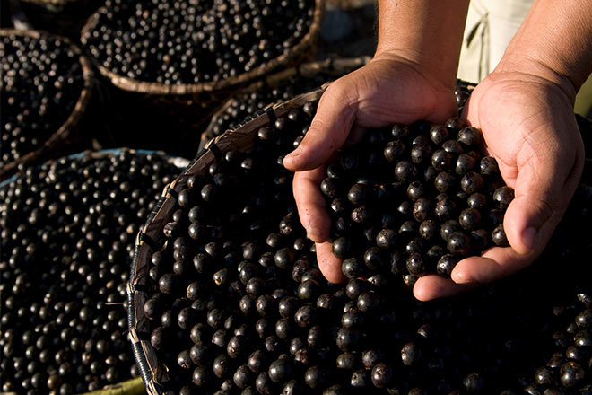 belo horizonte acai berries