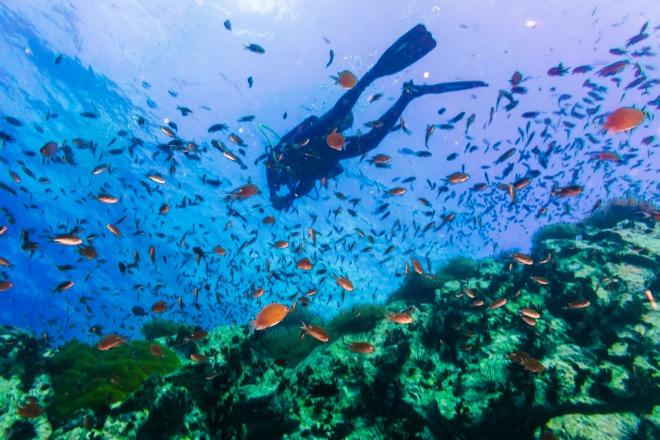 Submarinismo por las aguas cristalinas de Koh Tao