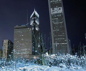 Buying a real Christmas tree in Chicago