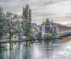 Einen echten Tannenbaum kaufen in Genf