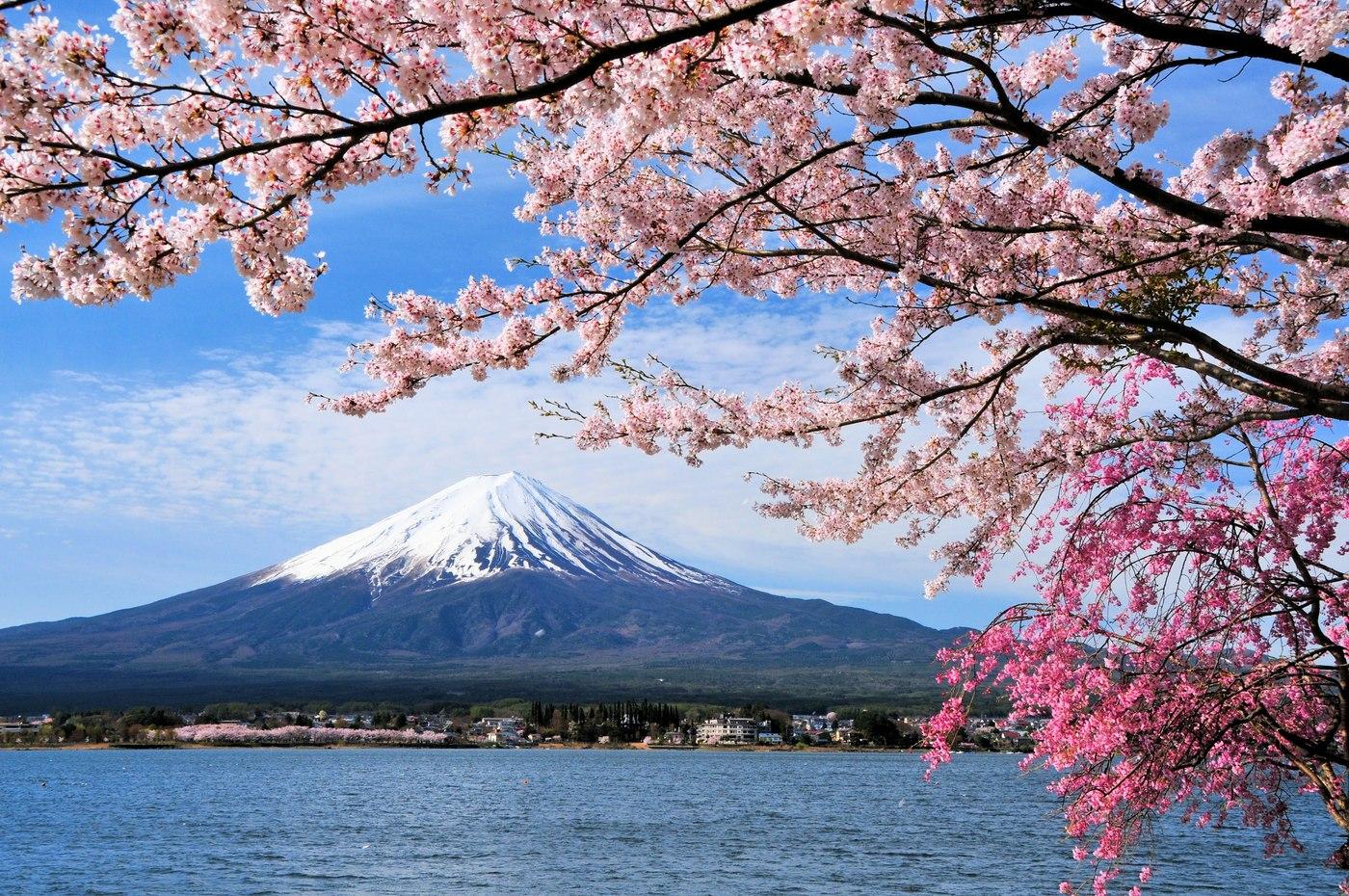 Cherry Blossom Season in Japan