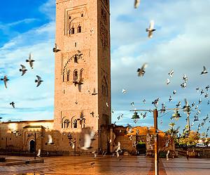 Flâner à deux dans le jardin de Majorelle à Marrakech
