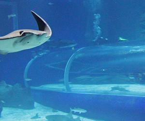 Conheça o AquaRio: o maior aquário da América do Sul