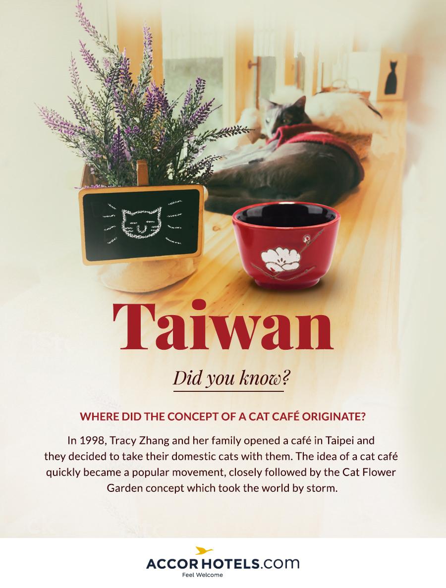 Cat café in Taiwan