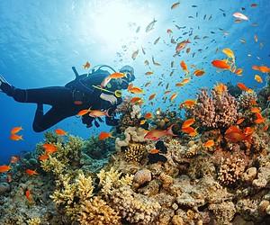 Unbelievable Scuba Diving Destinations