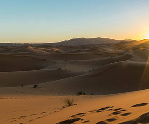 Take on the desert in a 4x4
