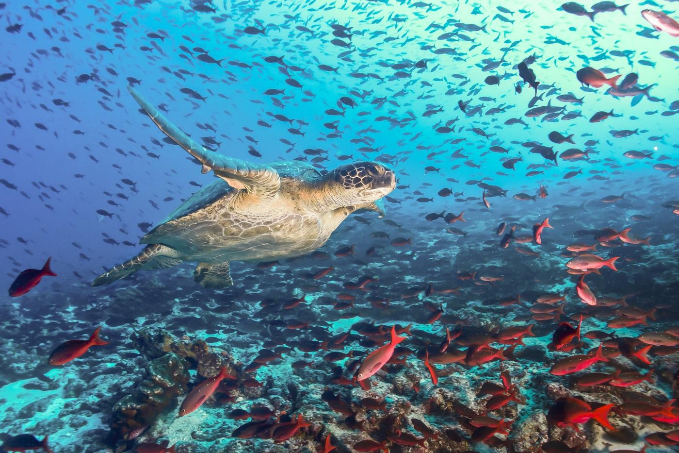The Galapagos Islands
