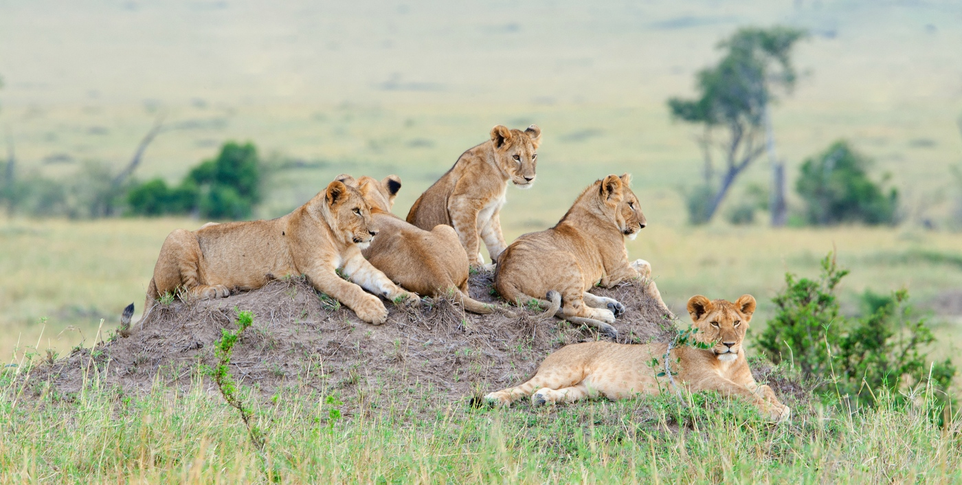 Wildlife in Serengeti