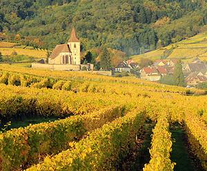 Faire une dégustation de vins d'Alsace à Colmar