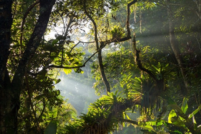 floresta_tropical_de_mata_atlantica