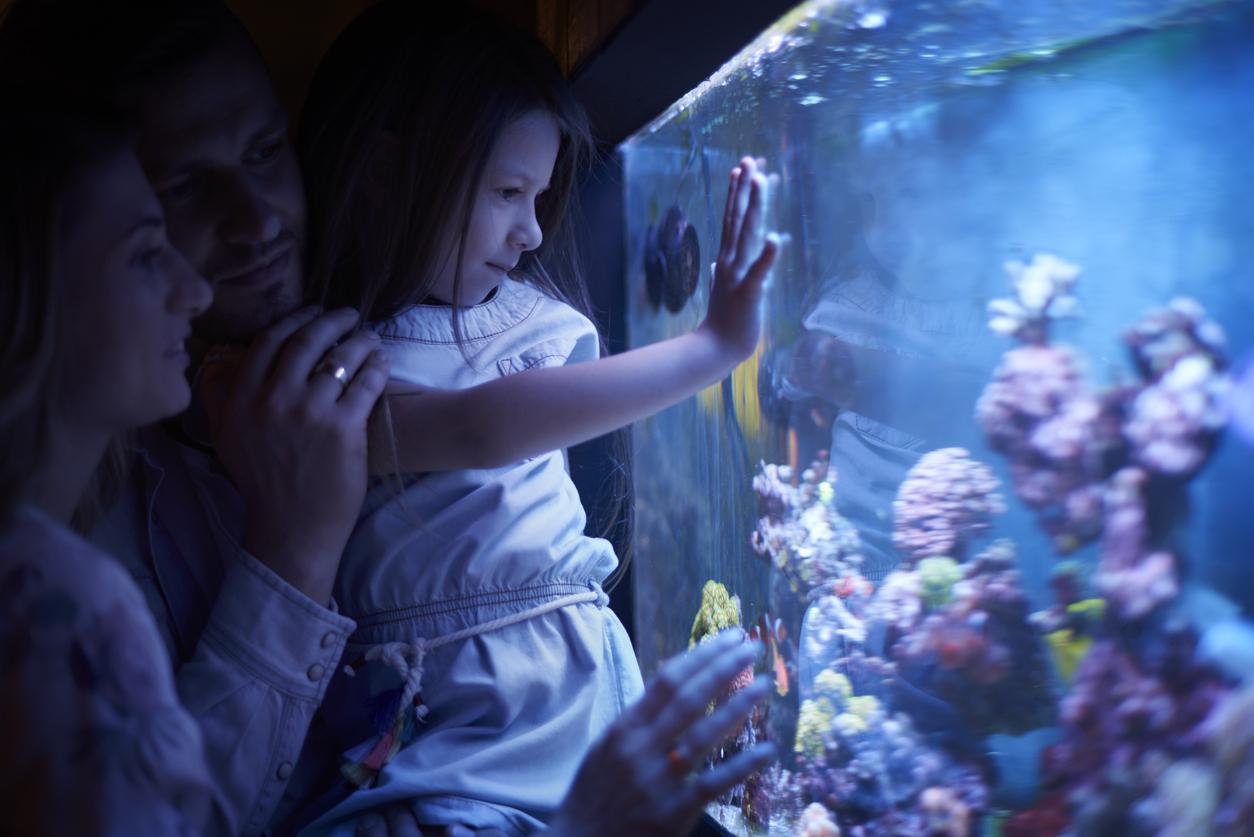 Aquarium Sealife scheveningen