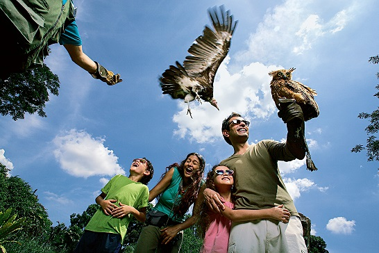 Jurong Bird Park, Singapore Tourism Board