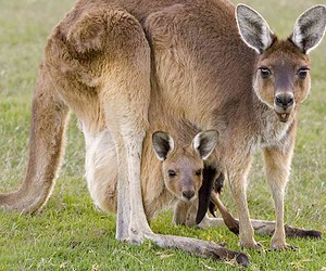 Visit Sydney for family-friendly animal attractions