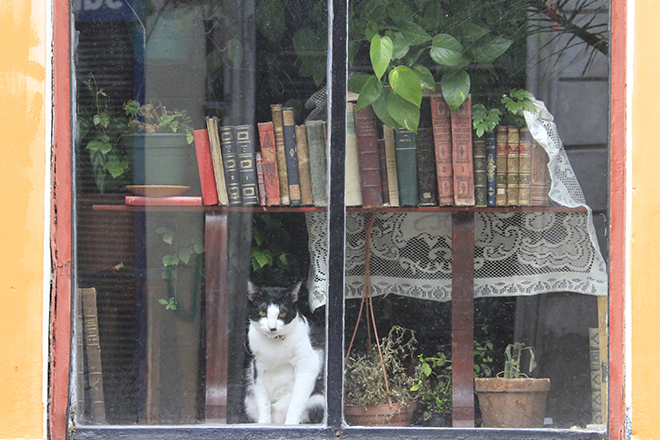 Livraria em Montevidéu (Foto: Getty Images)