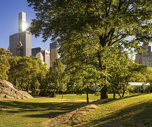 Dévorer un bon livre à Central Park