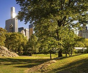 Devour a novel in Central Park