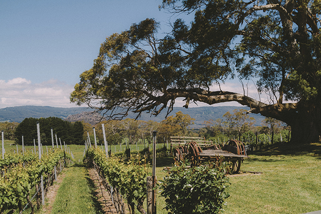 Hanging Rock Winery's gardens