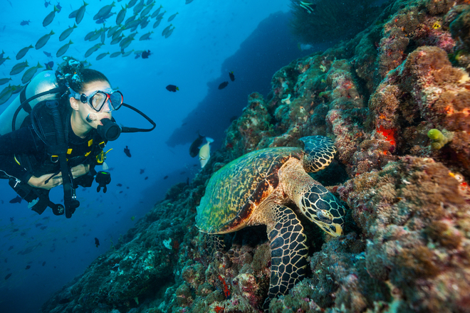 Best Dive Sites in the Maldives