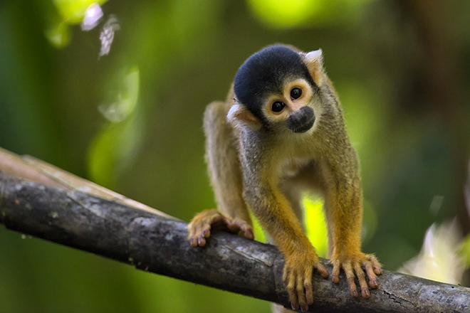 Randonnée dans la forêt amazonienne à Manaus