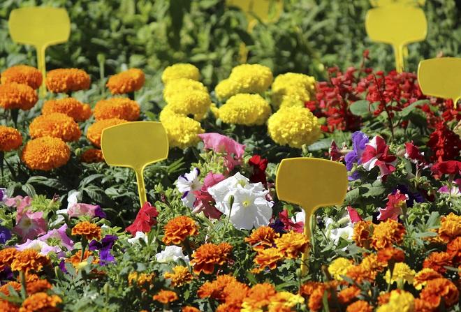 Bloemenmarkt Nice