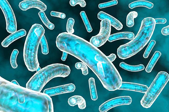 Micro-organismen worden zichtbaar in Micropia