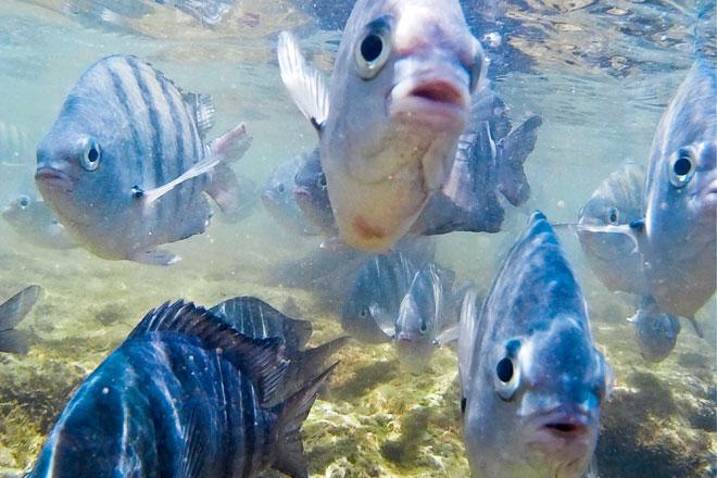 Peixes em Porto de Galinhas