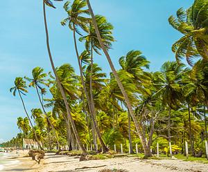 4 coisas imperdíveis para fazer na Praia dos Carneiros