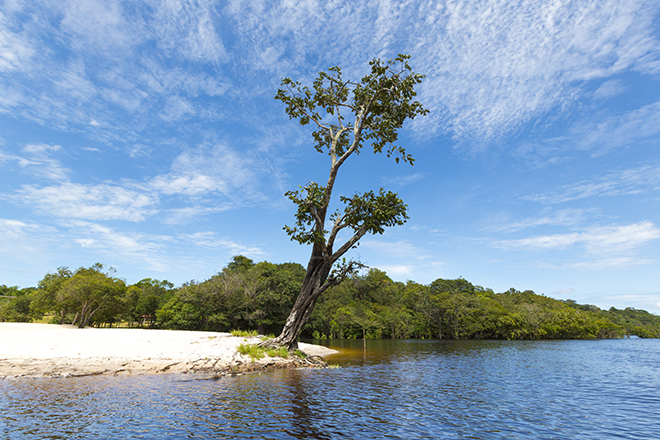 Umas das mais bonitas do Amazonas