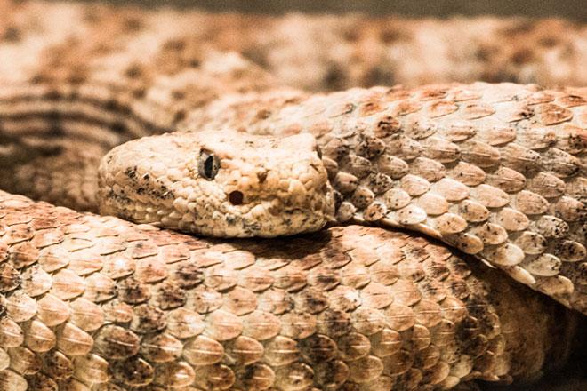 Museu de História Natural de Campinas (Foto: Getty Images)