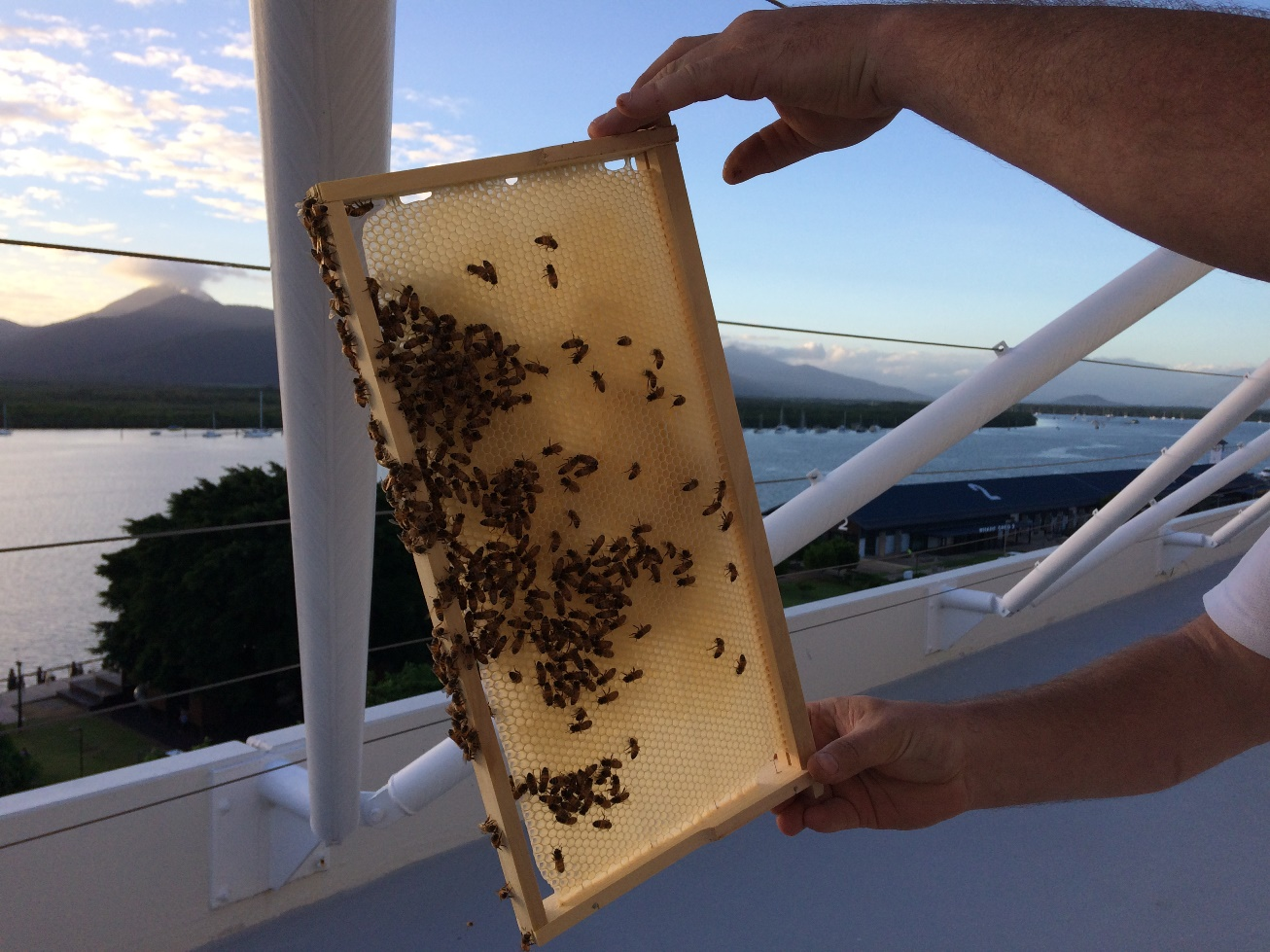 Pullman Reef Hotel Casino's bee collection