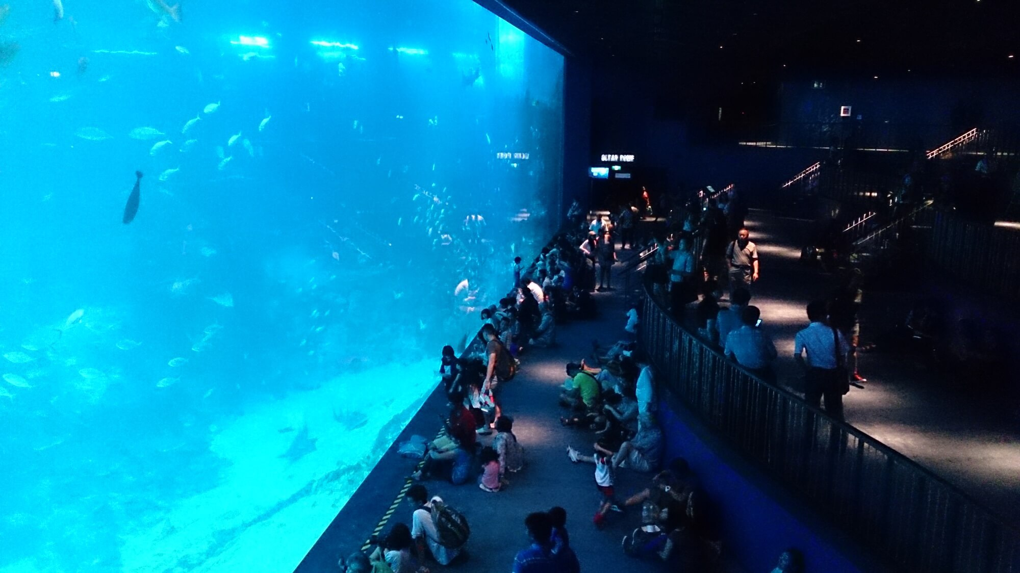 S.E.A. Aquarium Singapore. Source: Project Manhattan
