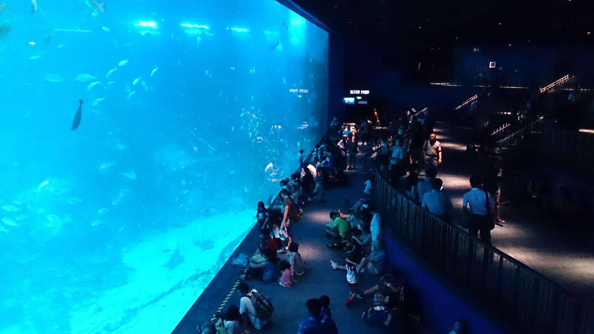 S.E.A. Aquarium Singapore. Source: Project Manhattan