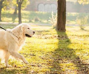 Um dia para descobrir São Paulo com seu cachorro