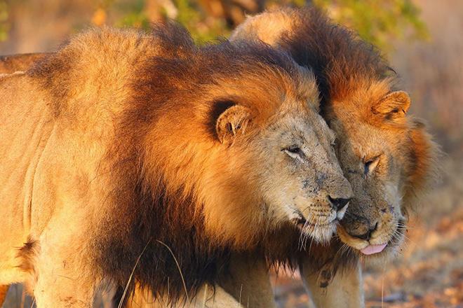animaux afrique du sud