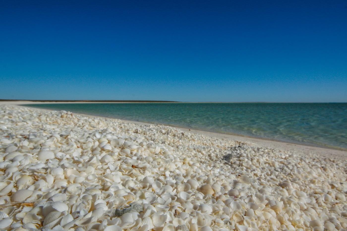 shell-beach-australia