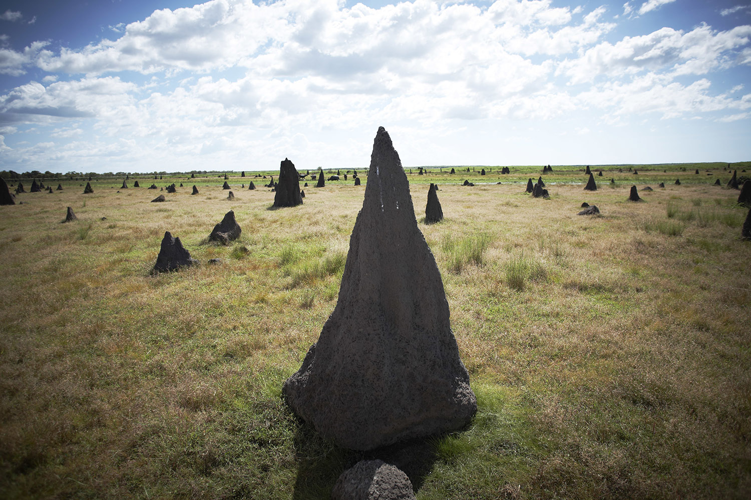Magnetic Termite Mounds - Tourism Australia