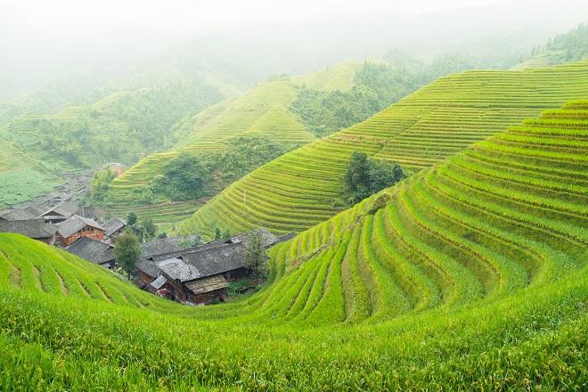 Arrozales en terrazas, Patrimonio de la Humanidad en Filipinas
